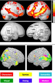 Brain regions that encode words, grammar, story identified.  Scientists have produced the first integrated computational model of reading, identifying which parts of the brain are responsible for such sub-processes as parsing sentences, determining the meaning of words and understanding relationships between characters. They based their results on brain scan of people reading a Harry Potter book.