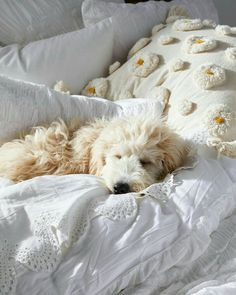 Beautiful Dogs, Beautiful World, Beautiful Things, Anthropologie Instagram, National Puppy Day, What Day Is It, Labradoodle, Goldendoodles, Winter House