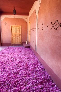 Morocco, High Atlas, Dades Valley, Rose Valley, village of Hdida, roses (Rosa Damascena) freshly picked are spread over the ground of a kasbah looking forward to the distillation, which is made within hours which follow the picking