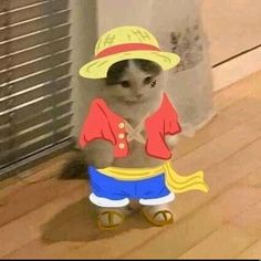One Piece Luffy, One Piece Anime, Cute Baby Cats, Kittens Cutest, Otaku Anime, Anime Guys, Wladimir Putin, Cat Icon, Cat Stands