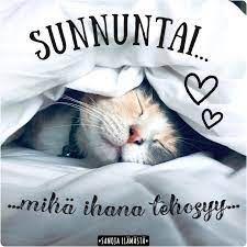Facebook Sunday Quotes, Facebook, Cats, Animals, Gatos, Animales, Animaux, Animal, Cat