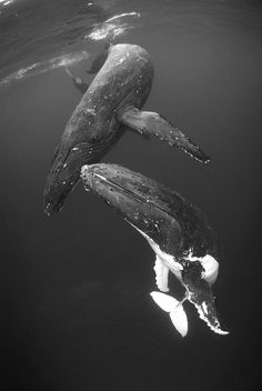 Hump2B by Rory Moore, via Flickr