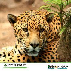 ¿Eres amante de la naturaleza? De seguro te encantarán los animales viviendo libremente en su hábitat natural... ¡Ven a Centroamérica y ten un acercamiento con ellos!