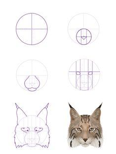 Lynx head frontal view