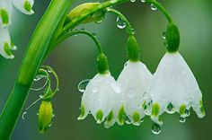 Flowers with water drops