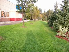 Commercial Lawn Care, Weed Control and Maintenance
