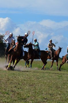 Gathering with all the top Polocrosse players at Antelope Park. Horses, Future, Park, Top, Life, Future Tense, Horse, Parks, Crop Tee