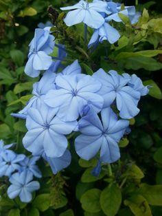 Photo by AngelaRizzo® ~ magic flower