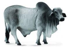CollectA 88579 - Brahman Bull