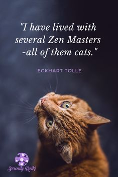 Learn an introduction to Animal Reiki and connect deeper with your pet, while helping them heal on all energetic levels. Animal Quotes, Pet Quotes, Friend Quotes, How To Start Meditating, Reiki Quotes, Animal Reiki, Power Of Now, Reiki Energy, Eckhart Tolle
