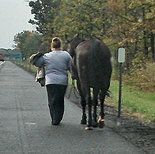 Thruway motorists rescue horse who escaped onto highway near Canastota | syracuse.com