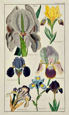 stilllifequickheart:      David Dietrich  Flora Universalis  1831-35