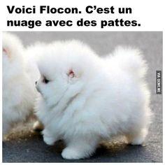 Un petit chien avec une touffe de poiles ha http://go.jeremy974.zenoto.3.1tpe.net
