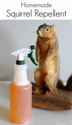This easy to make homemade squirrel repellent spray will keep the critters away from you vegetable garden or outside fall decor. The post This easy to make homemade squirrel repellent spray will keep the critters away appeared first on Decoration. Gardening For Beginners, Gardening Tips, Gardening Websites, Gardening Gloves, Flower Gardening, Flowers Garden, Hydroponic Gardening, Outdoor Projects, Garden Projects
