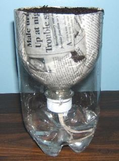 Great way to start seedlings....Self-watering planter made from recycled materials - 2 liter soda bottle cut in half, newspaper to line the planter and cotton twine for a wick.