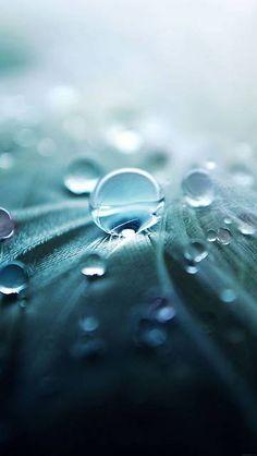 ml53-raindrops-nature-leaf-art-green