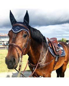 Jeździectwo - zalety konnej jazdy. http://womanmax.pl/jezdziectwo-zalety-konnej-jazdy/