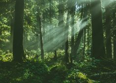 Sedna 90377 | Lighting the Rainforest by Tedrick Mealy