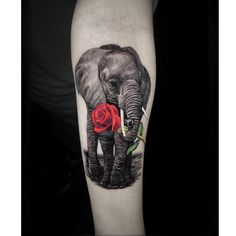 Did this lil elephant for my client. Yes I desaturated the black and grey area please don't report me to the tattoo police. Elephant Tattoo Meaning, Cute Elephant Tattoo, Elephant Tattoo Design, Trendy Tattoos, Unique Tattoos, Small Tattoos, Tattoos For Guys, Rose Tattoos, Body Art Tattoos