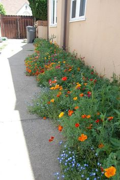 Poop Alley Poppies - Far Out Flora Sidewalk Landscaping, Makeover Party, California Native Plants, California Poppy, Weed, Poppies, Flora, Landscape, Places