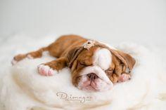 Newborn puppy www.dimages.com.au