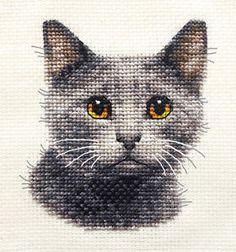 Gris cat, chaton ~ originale complète Compté Cross Stitch Kit + tous les matériaux