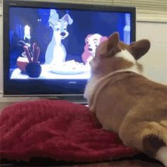 Corgi & Lady & the Tramp