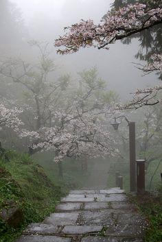 Lindo y silencioso paseo
