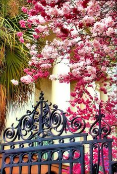 Spring in Charleston, South Carolina. I LOVE Charleston. Beautiful World, Beautiful Gardens, Beautiful Flowers, Beautiful Places, Plantation, Garden Gates, Garden Entrance, Charleston Sc, Oh The Places You'll Go