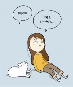Cats are weird creatures I Love Cats, Cute Cats, Funny Cats, Crazy Cat Lady, Crazy Cats, Siamese Cats, Cats And Kittens, Amor Animal, Cat Comics