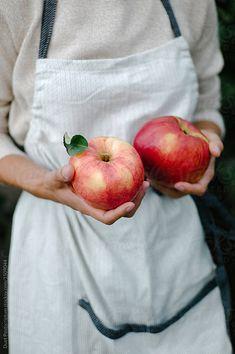 Woman holding apples in garden by Duet Postscriptum - Apple, Fresh - Stocksy United Apple Farm, Apple Orchard, Apple Harvest, Harvest Time, Autumn Harvest, Apple Tree, Red Apple, Fresco, Apple Season
