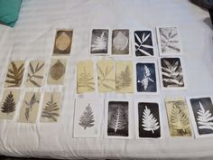 Sandra Pearce  Gelli Plate prints of local plants, printed onto postcard blanks, japanese papers and tags