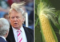48 Things That Look Just Like Donald Trump Who Wore It Better? Donald Trump Or This Ear Of Corn? ~ 15 things that look just like Donald Trump - Colorful Toupee Hairs Donald Trump Hair, Donald Trump Funny, Donald Trump Pictures, Memes Humor, Funny Jokes, It's Funny, Funniest Memes, Humor Quotes, Memes Super Graciosos