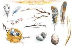 Watercolor Bird Nest Clipart by Dora Katona on Creative Market