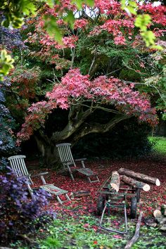 Red Leaves and Chair