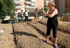 diaridetarragona.com - La tierra de ciudad también da frutos