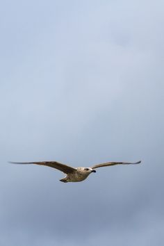 Flying high overlooking the ocean.