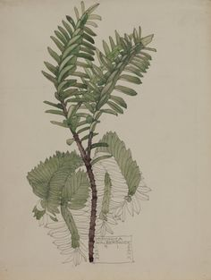 Hunterian Art Gallery Mackintosh collections: GLAHA 41022