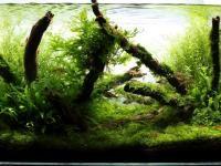 ROŚLINY W AKWARIUM: Stan roślin w akwarium zależy od tego, ile światła dostarczymy do akwarium, jakie ryby tam wpuścimy i jak będziemy o nie dbać. Prosty przelicznik stosowany przez pasjonatów akwariów to zapewnienie 0,5 W światła na 1 litr wody w akwarium. Zatem przy standardowym 100-litrowym akwarium oświetlenie powinno mieć moc ok. od 50 W do maksymalnie 70 W.