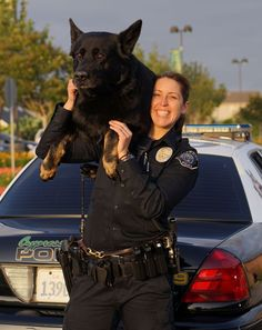 After being injured arresting a felon, Cypress K-9, Sem, returns to work with his partner, Officer Mathias.