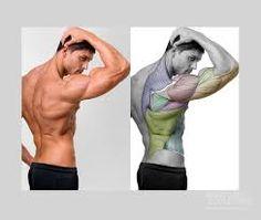 Risultati immagini per anatomy for sculptors