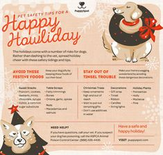 HOLIDAY PET SAFETY TIPS – HOW TO PROTECT YOUR NEW PUPPY AND ALL OF YOUR PETS!