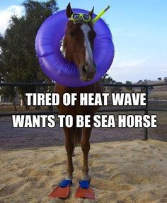 He wants to be a seahorse