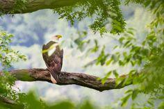 Bald eagle overlooking Lake Cumberland #baldeagle #Lakecumberland #KY #Photography