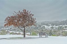 I took this photo of the late April snowstorm in upstate NY. Hoping the blossoms survive.