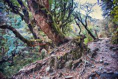 Jungle Trekking, Trek to Poon Hill, Nepal | Flickr - Photo Sharing!