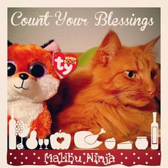 #countyourblessings #spam #spamthecat #gingerkitty #goodmorning