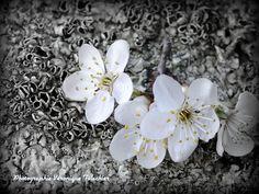 ENSEMBLE A AILHON: C'est le printemps...