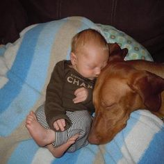 Sweet Vizsla and baby picture :)