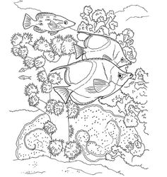 Pin By Kim Kalkstein On Coloring Pages